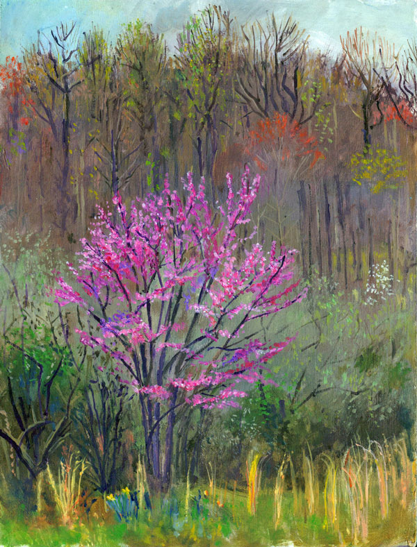 redbud-tree-Hines-Hill