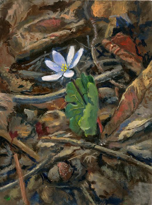 Wildflower Bloodroot