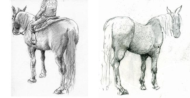 Drawing Horses Mark Koslow