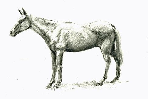 horse-aug-2018